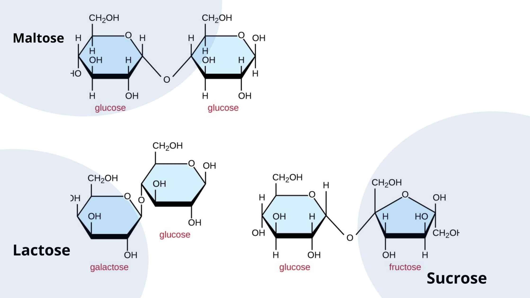 sucrose, lactose, and maltose.